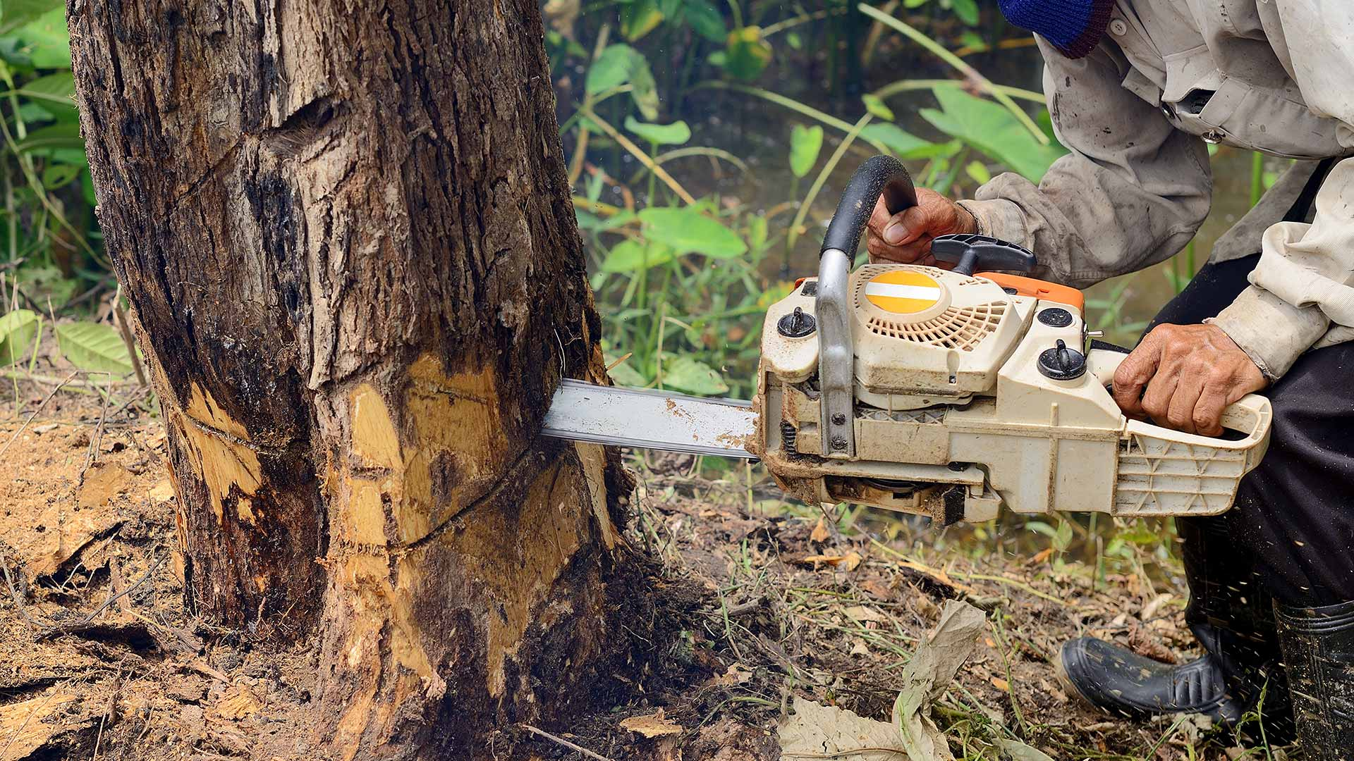 Chainsaw cutting down a dying tree in Haymarket, VA.
