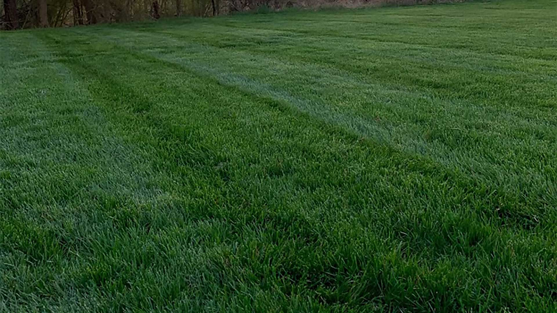Our 9-step premium lawn care program helped this Haymarket client's lawn grow green and strong.