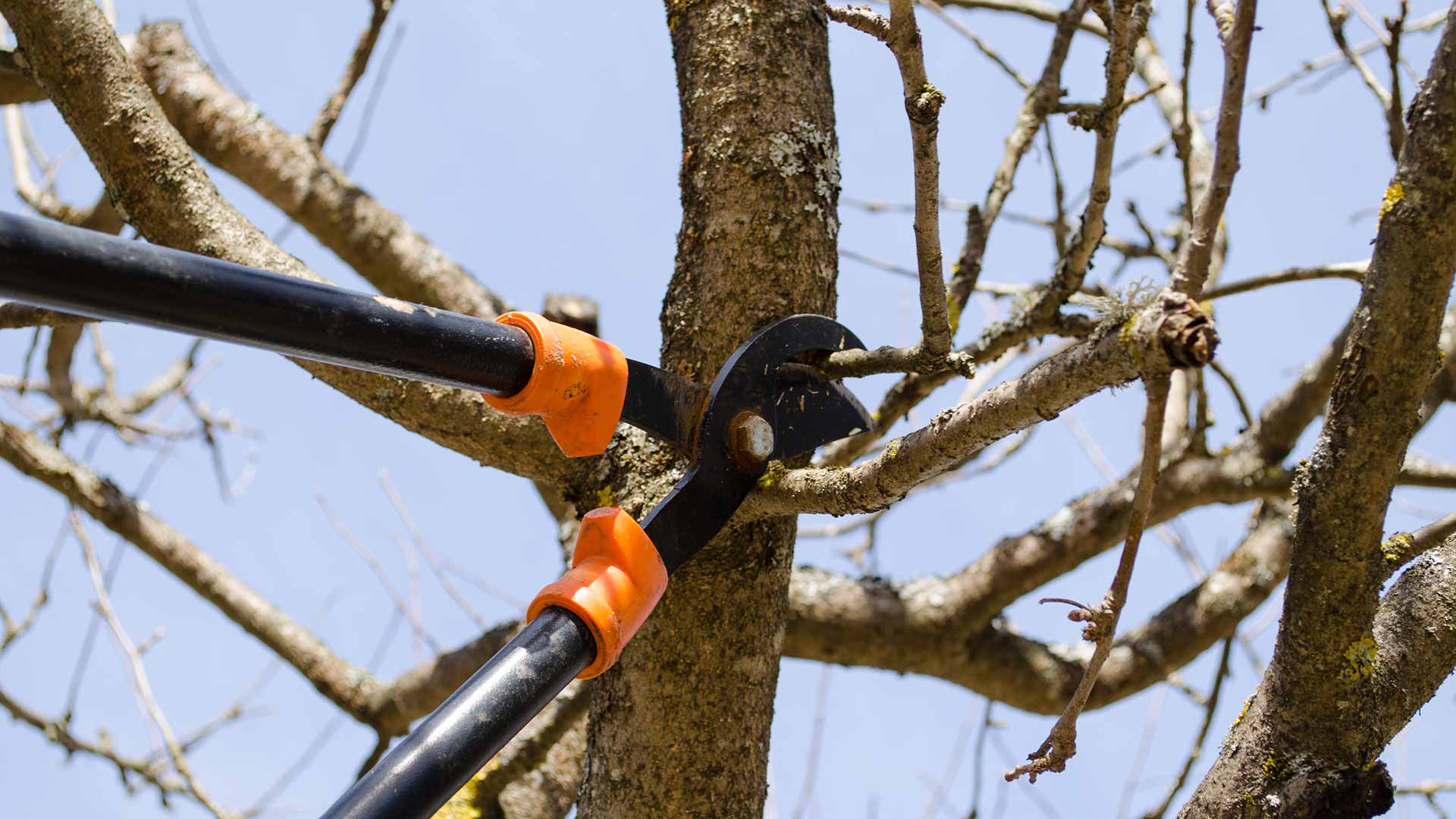 Tree limbs being pruned and trimmed on a Bristow, VA property.