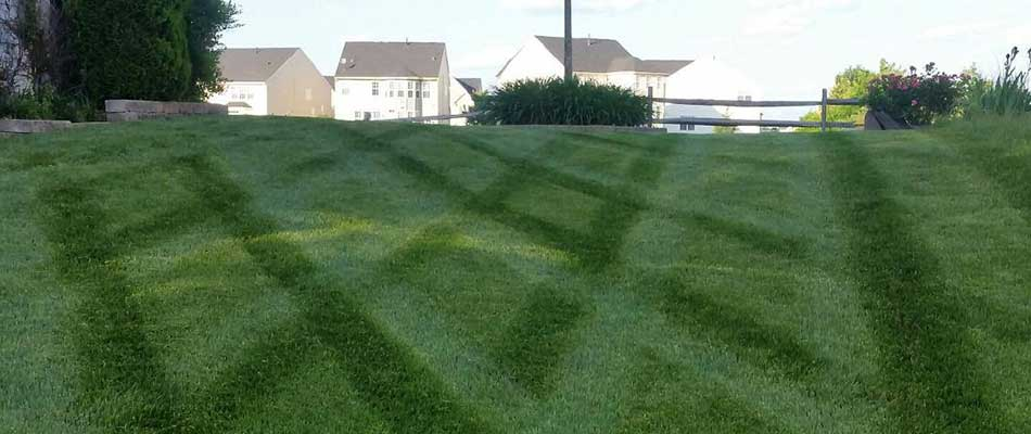What Times of the Year Your Yard Needs Lawn Care Treatments