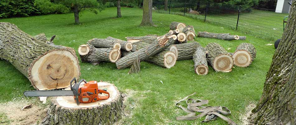 3 Critical Questions to Ask a Tree Removal Company