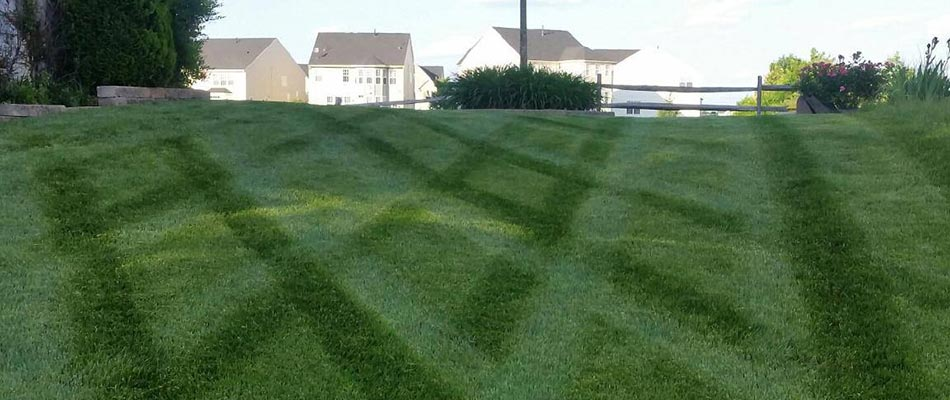 This well-fertilized lawn in Manassas is healthy and thriving.