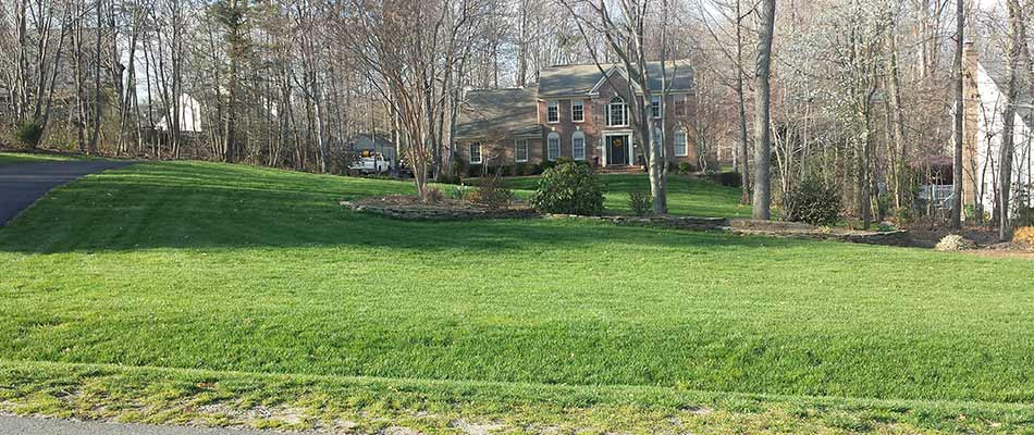 Healthy home lawn after compost top dressing treatments in Manassas, VA.