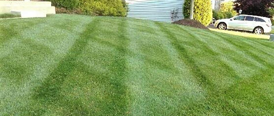 A healthy lawn at a home in Haymarket, VA.
