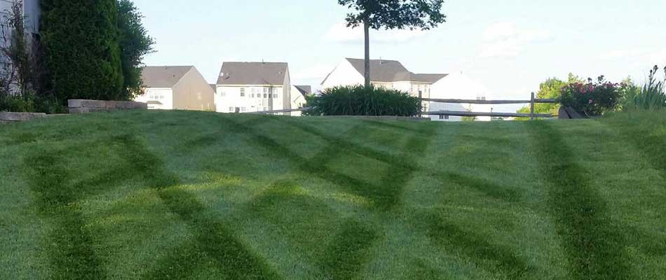 A well-fertilized, healthy lawn at a home in Manassas, VA.