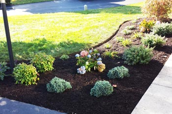 Regular landscape maintenance with fresh mulch in front of a home in Haymarket, VA.