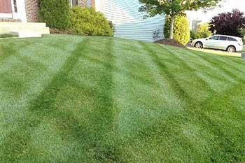 Healthy, green, lush lawn that receives fertilization treatments by our team of professionals.