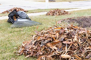 Leaves and debris collected during a yard cleanup in Bristow, VA.